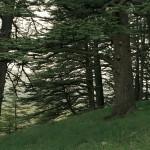 Un angolo segreto della Foresta Sacra.